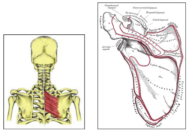 anatomical complexity 4